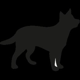 Mittelgrosse Hunde